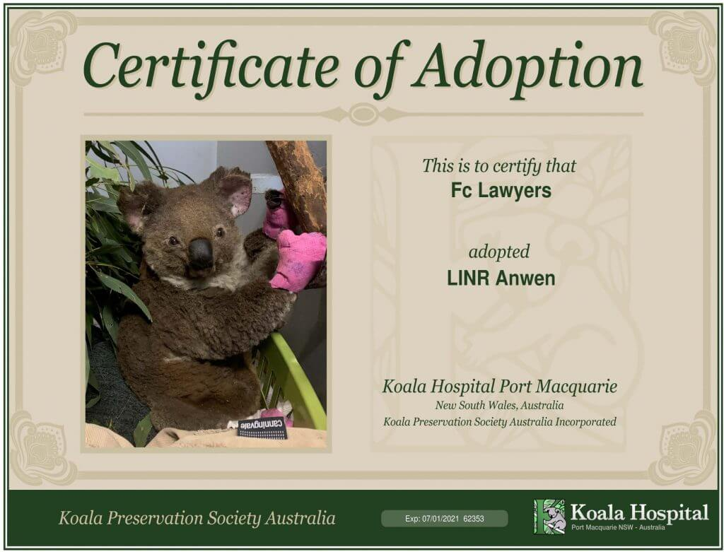 Anwen Koala Hospital Port Macquarie Bushfires NSW